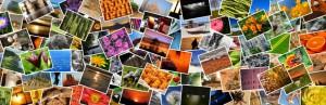 画像探しにもう困らない ワードプレスでフリー(無料)の再利用可能な画像を使い放題なプラグイン Pixabay Images